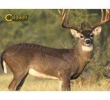 Caldwell Natural Targets Retail Display
