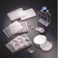 BD BioCoat Cellware, Collagen Type IV, BD Biosciences 354534 Culture Flasks T-25 (25 cm2)