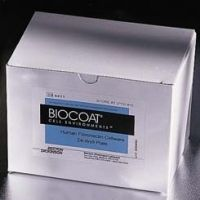 BD BioCoat Cellware, Fibronectin, BD Biosciences 354532 Culture Flasks T-25 (25 cm2)