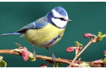 Bird up close
