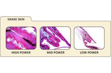 8-Celestron Digital Microscope Imager