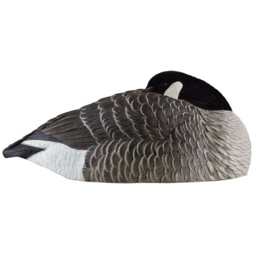 Avian X Canada Sleeper Shells Save 20% Brand Avian X.