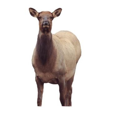 Montana Decoy Co. Eichler Elk Decoy Brand Montana Decoy Co..