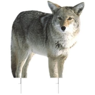 Montana Decoy Co. Kojo Coyote Decoy Save 12% Brand Montana Decoy Co..